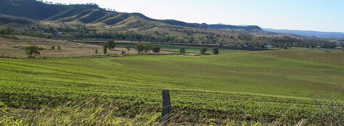 a fresh crop of green manure