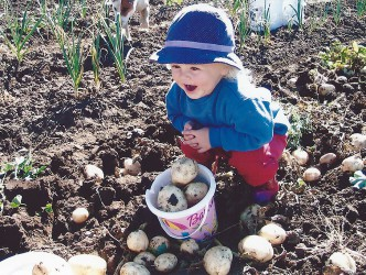 Kira Rose helping with the potato harvest (8 Jul 2006)