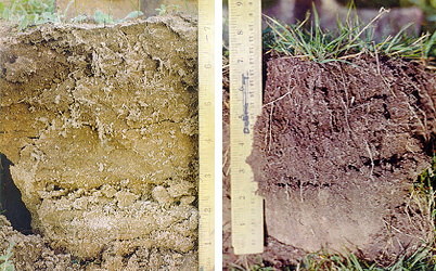 A comparison of soil samples, showing compacted and structured soil.